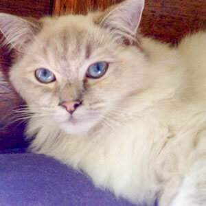 Cattery-Melbourne-fees-1