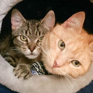 Cattery-Melbourne-petminding